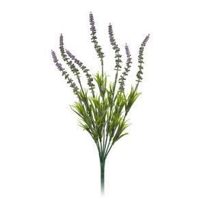 Цветы декоративные Лаванда