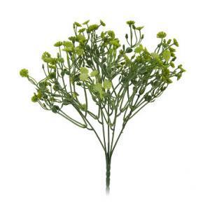 Цветы декоративные Агератум