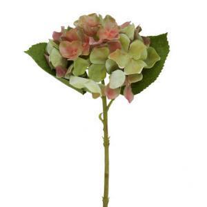 Цветы декоративные Гордензия